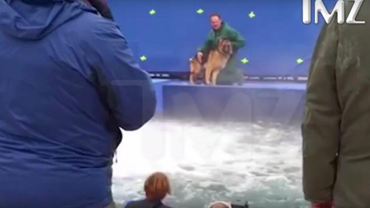 Mega Aufreger In Hollywood Tierquälerei Am Filmset Zu
